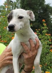 Adopt Mason On Pets Dogs Puppies Terrier Mix