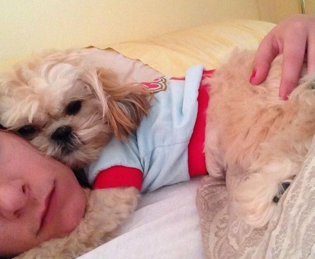 Resultado de imagen para shih tzu dog, likes hugs