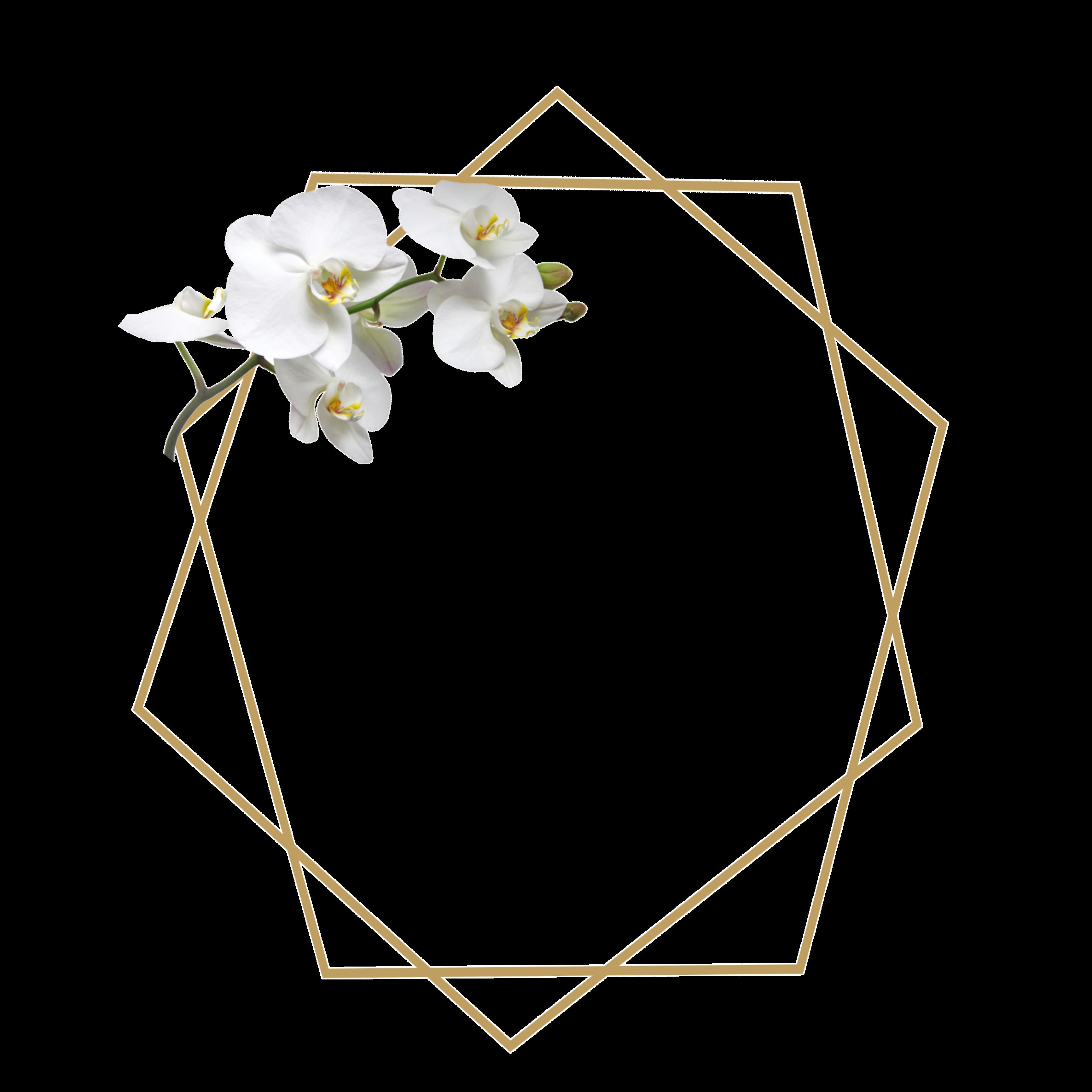Freetoedit ورد اوركيد ثيم ذهبي اطار Remixed From Mashaelpicsart Roroalrrr Flower Graphic Design Floral Border Design Baby Print Art