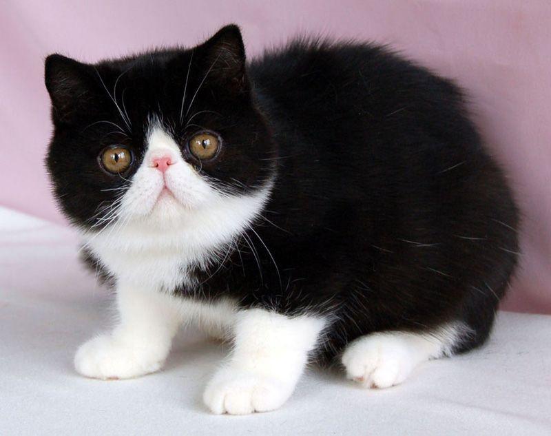 Pin On Z Animals Cats Kitties Katjies Felicidae