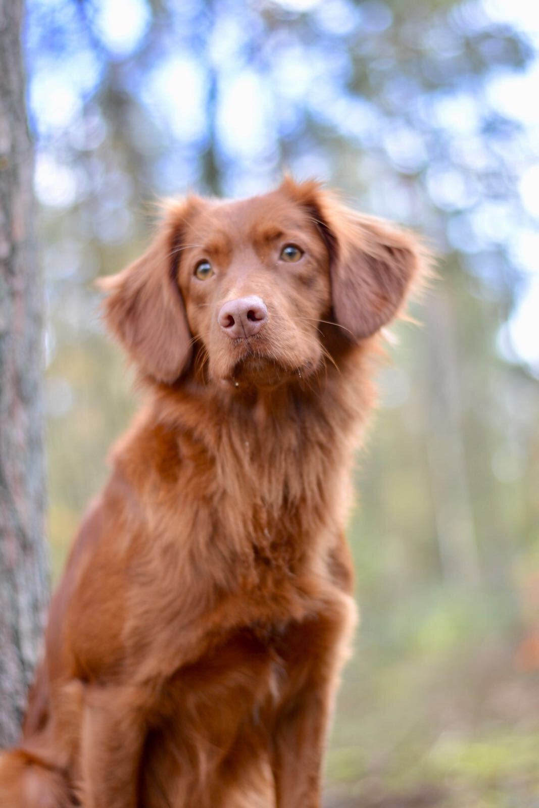 Pin By Jeff Smart On Tollers Hunter Dog Smartest Dog Breeds Pretty Dogs