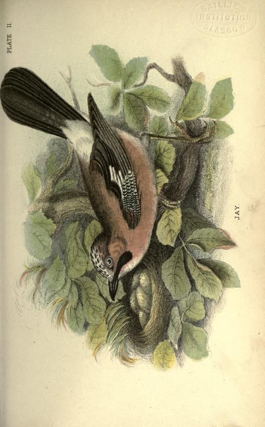 1894 - Hand-book to the birds of Great Britain by Sharpe, Richard Bowdler, 1847-1909