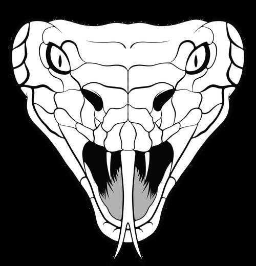 Pin By Paul Warner On Snakes Snake Drawing Snake Art Snake Illustration