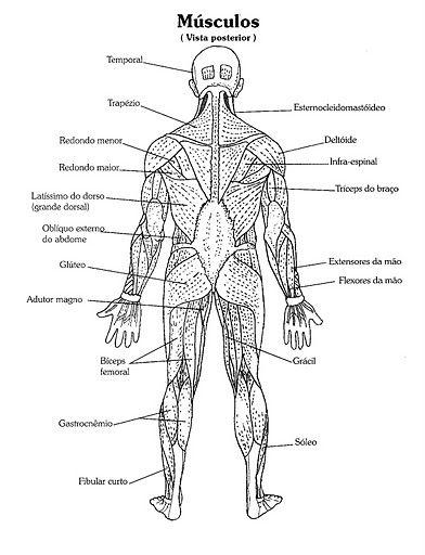 Anatomia Humana Músculos | ANATOMIA | Pinterest | Anatomia humana ...