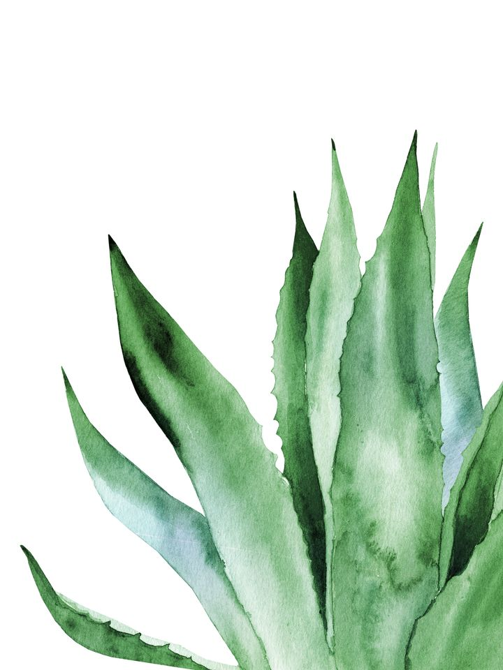 Agave Plant. Mini Art Print by asolo
