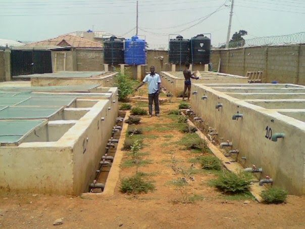 Fish Farming Business Plan In Nigeria Pdf  Sample Template To