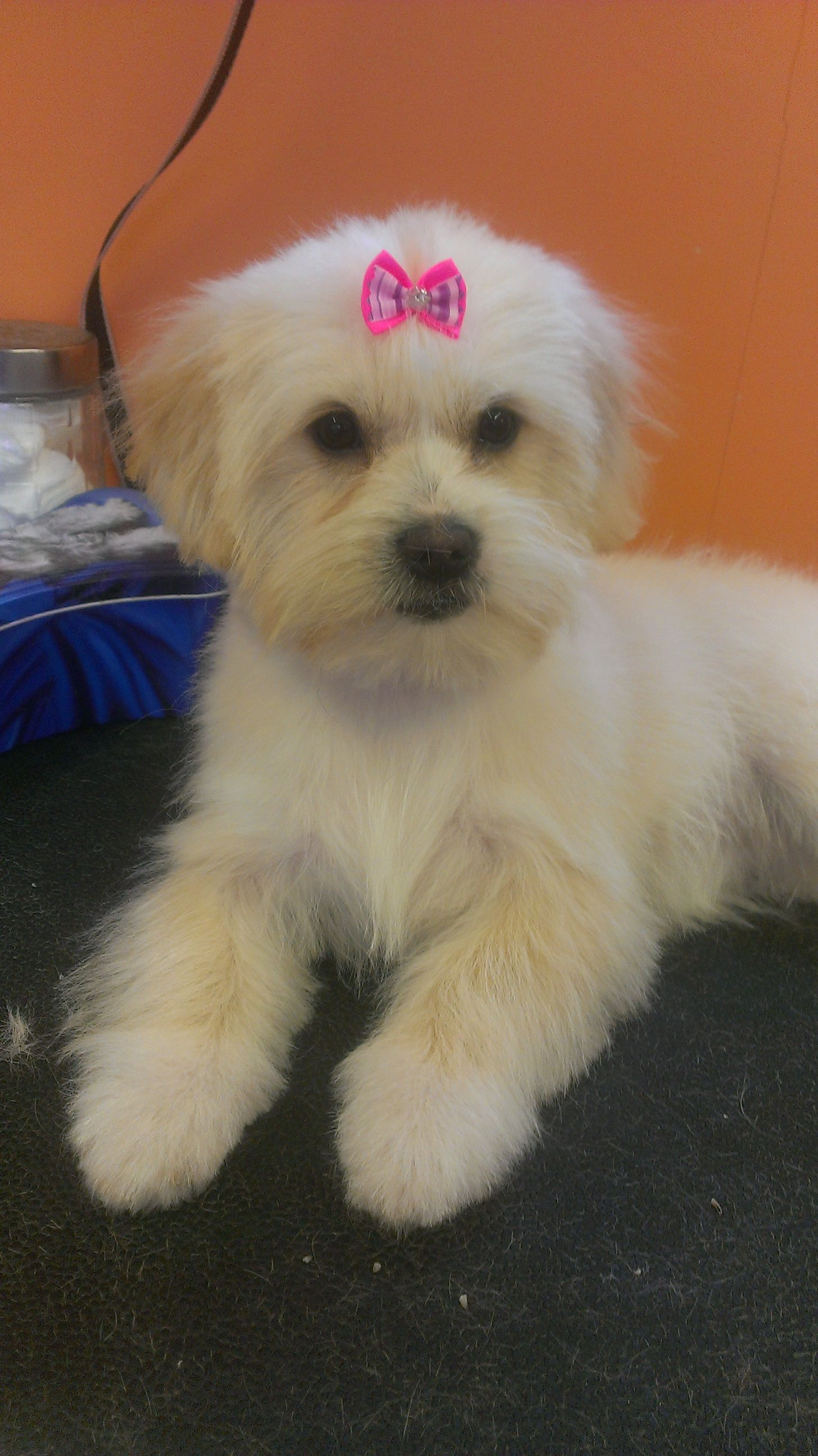 Pampered Pooch The Pampered Pooch Dog Grooming Salon With