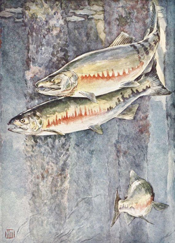 Salmon Print Fish Vintage Art Lake House Decor Home Office