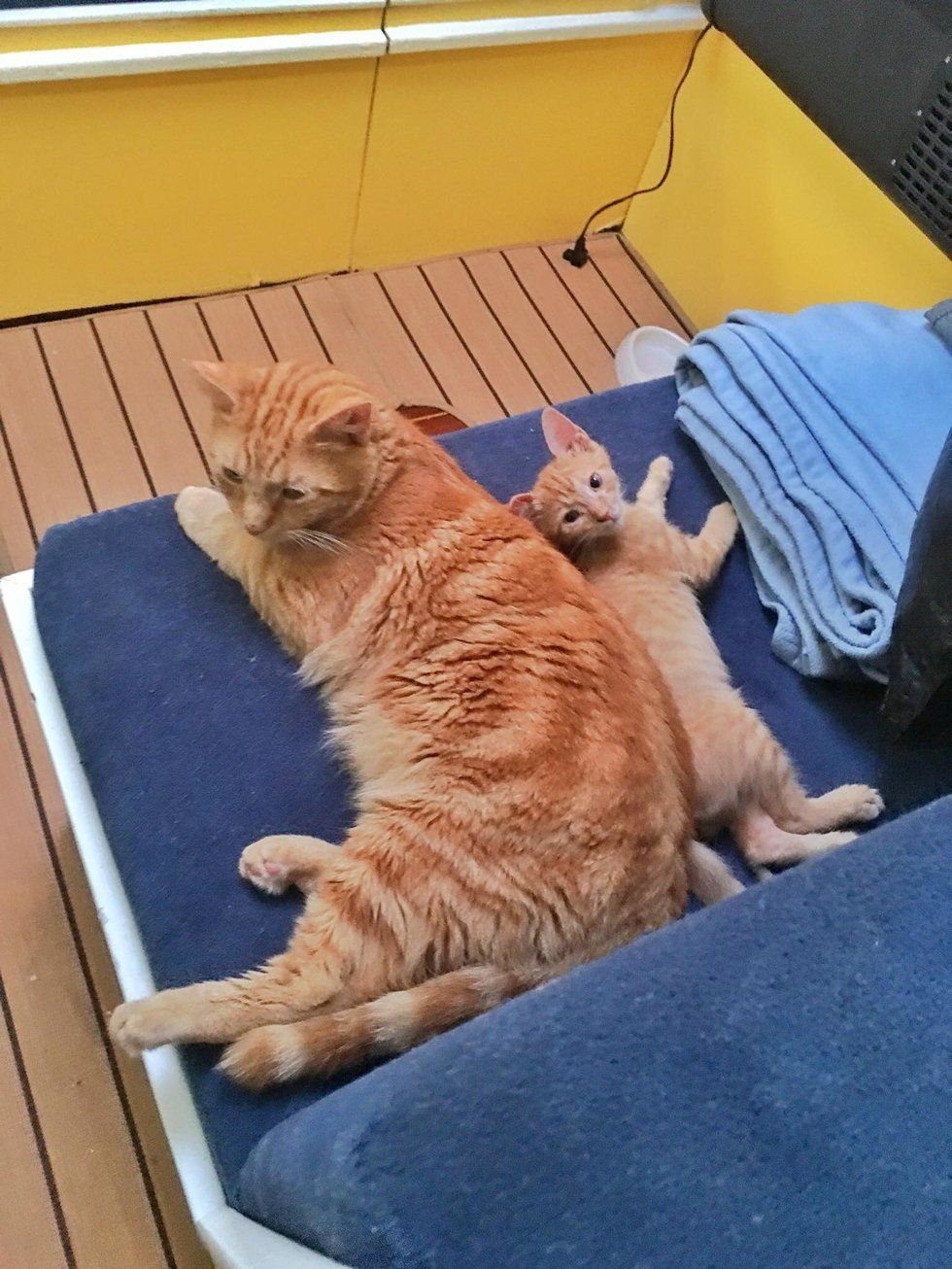 Rescued Kitten Who Needed a Home, Finds Sailor Cat Who