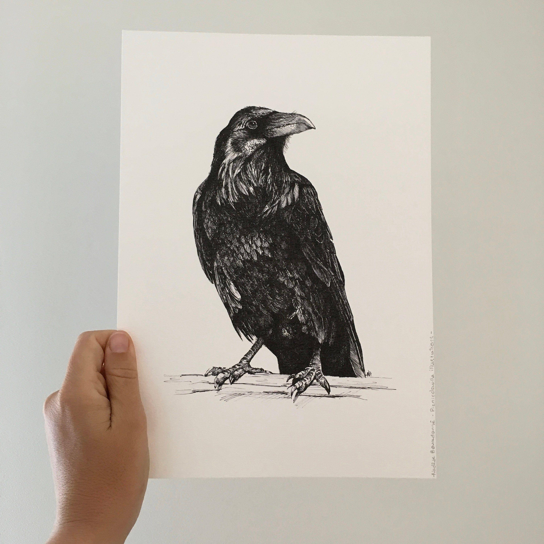 Corbeau Dessin Reproduction Illustration Oiseau Dessin