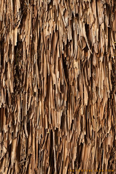 Bamboo Hut In Garden