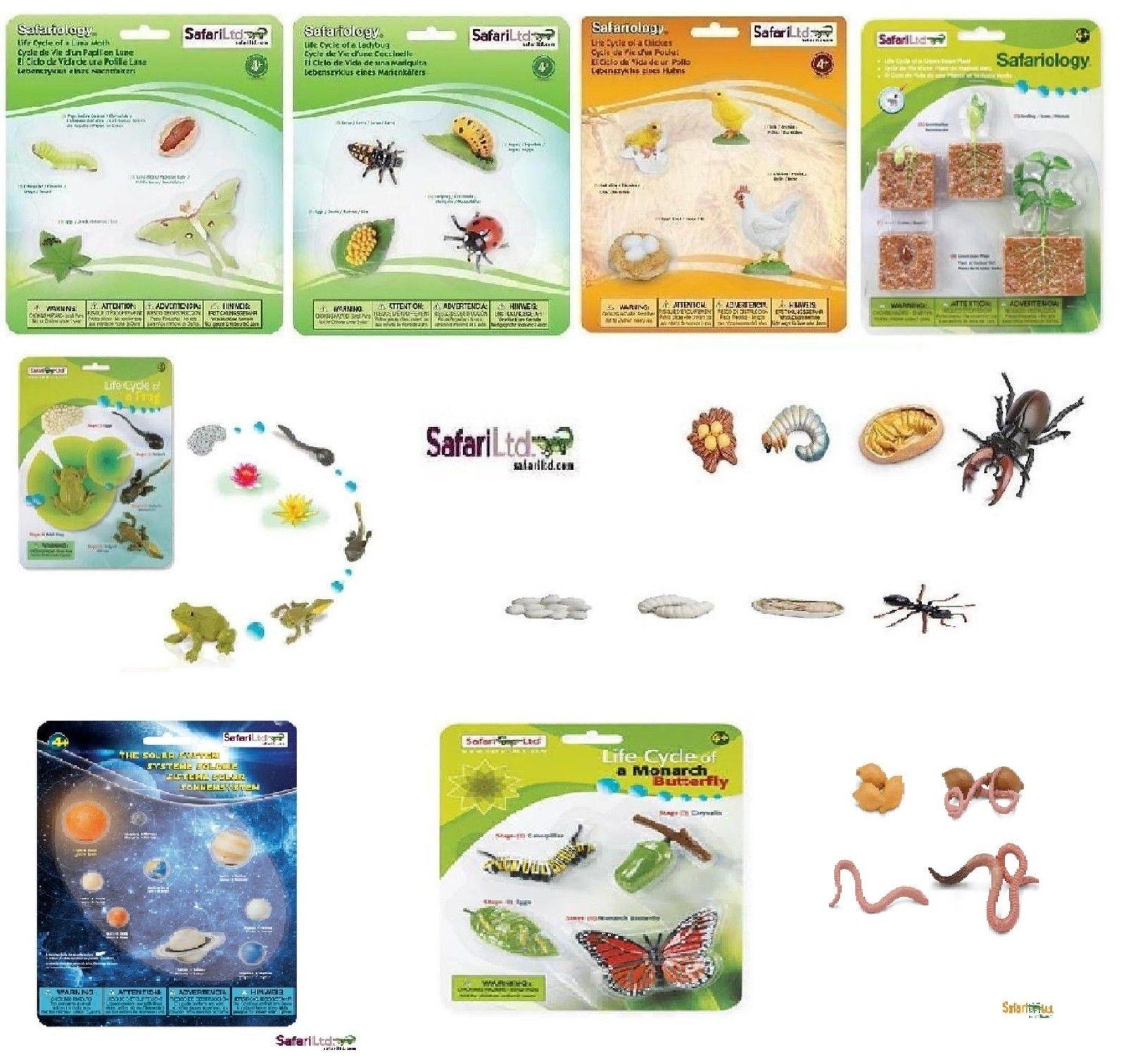 Cycle de vie fourmi papillon de nuit poulet coccinelle papillon safari ltd papillons - Duree de vie papillon de nuit ...