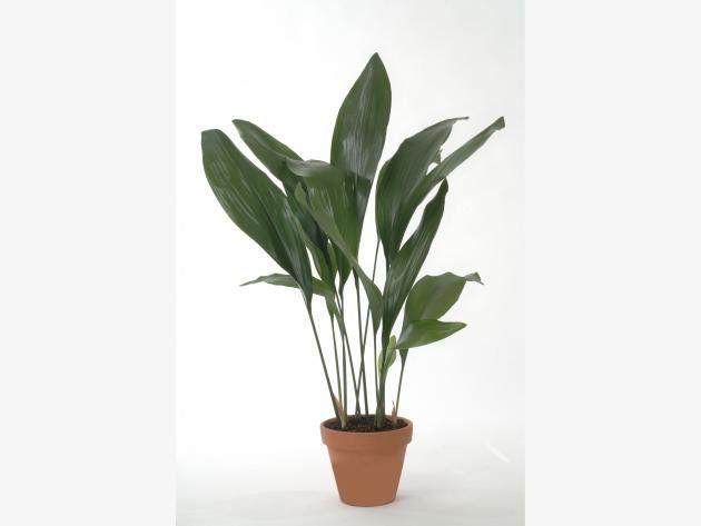 11 zimmerpflanzen f r dunkle ecken pflanzen pinterest pflanzen garten und zimmerpflanzen. Black Bedroom Furniture Sets. Home Design Ideas