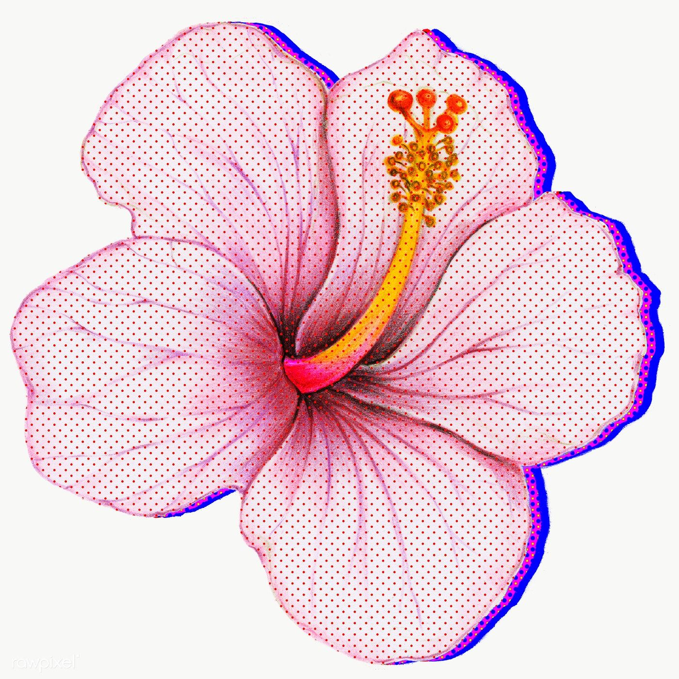 Halftone Hibiscus Flower With Neon Outline Sticker Overlay Free Image By Rawpixel Com Manotang In 2020 Hibiscus Flowers Flower Outline Hibiscus