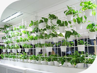 Sydney Vertical Gardens : Green Star Design : Green Buildings