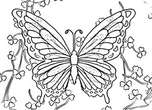 Trend Butterfly Coloring Book 17 Coloring Page Butterfly