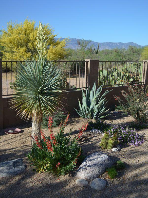 Landscaping Awards Tucson Az Sonoran Gardens Inc Desert Landscaping Arizona Landscape Succulent Landscape Design