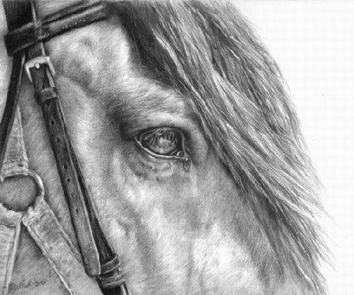 Horse Drawings   Horse Artist Interview – Sheona Hamilton-Grant