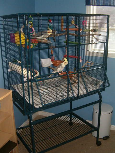 Post Your Bird Cage Pics Page 2 Pet Bird Cage Bird Cage Design Cockatiel Cage