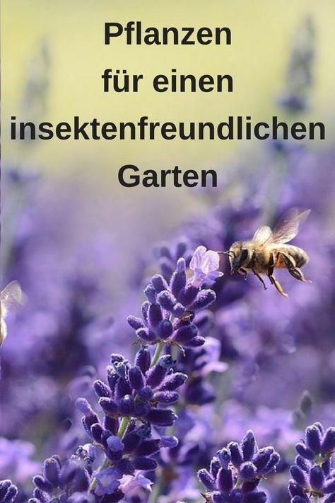 Bienenfreundlicher Garten – die richtigen Pflanzen #herbsgarden