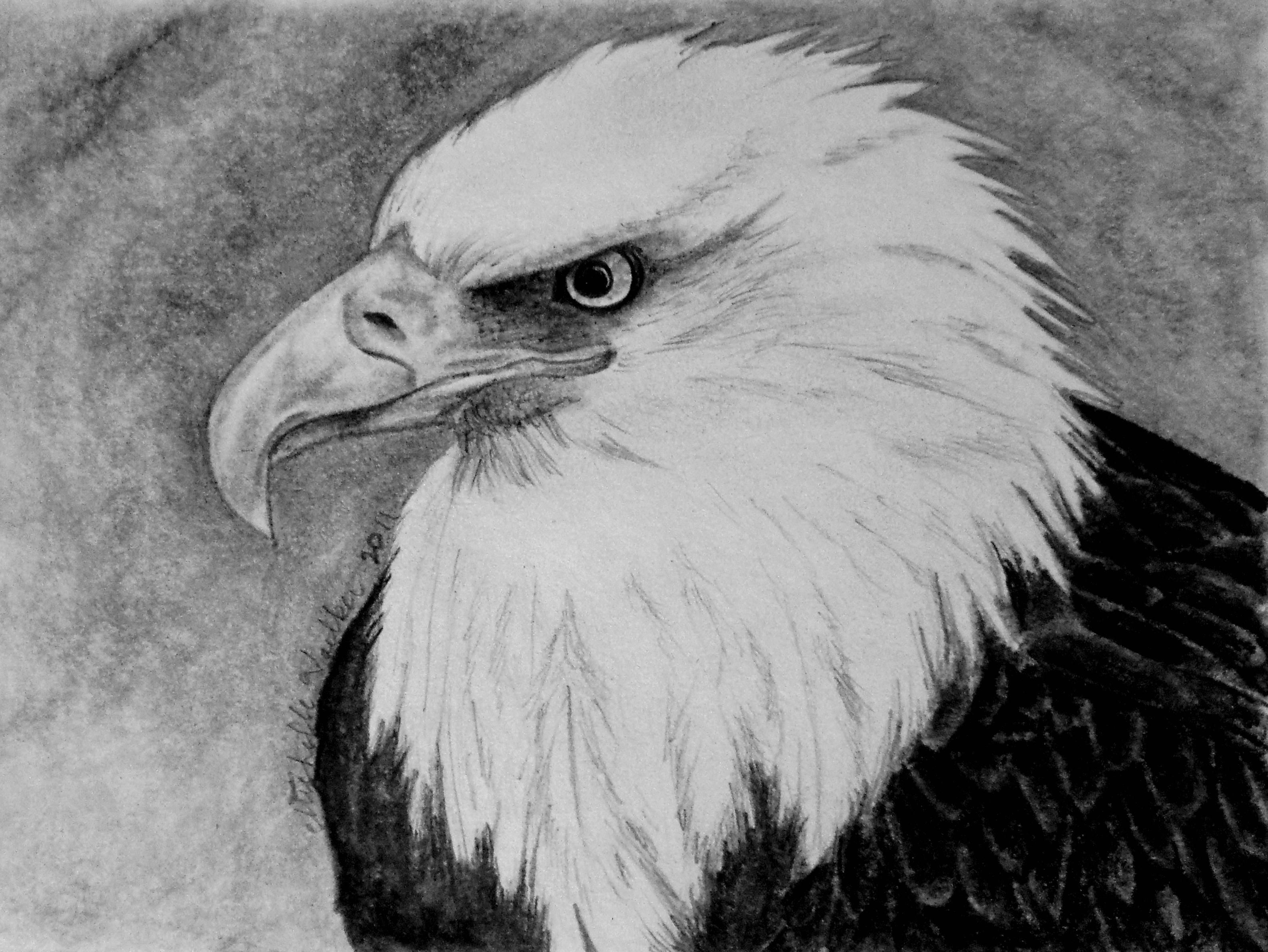Eagle pencil drawing michelles drawings pencil drawings