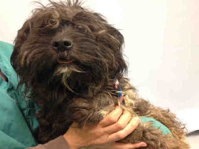 LINCOLN A1074241 (With images) Maltese mix, Dog safe