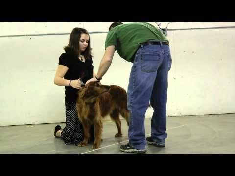 4 H Dog Showmanship Videos From Oregon 4 H Dog Show Dogs Dog
