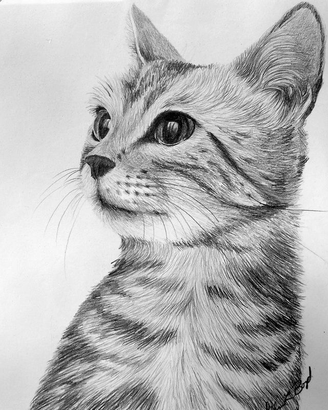 portraits - eileenboyd.ca art and gardens   - cat - #Art #cat #eileenboydca #gar...