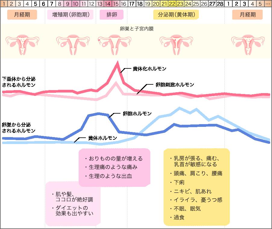 月経 周期 計算