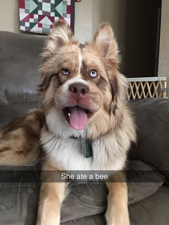 Bee careful: | 29 Dog Pictures That Are Never Not Funny