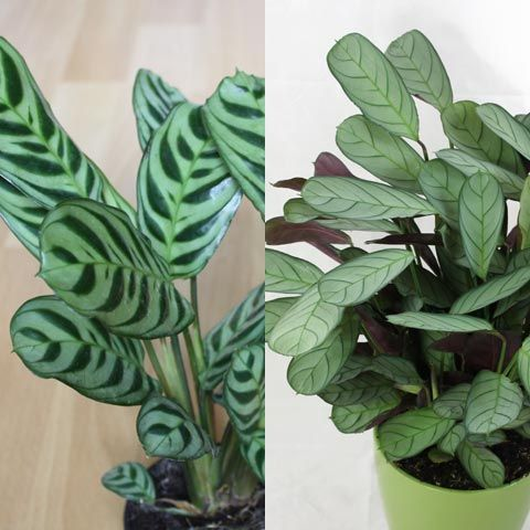 Indoor and tropical plants identification | Plants, Plant ...