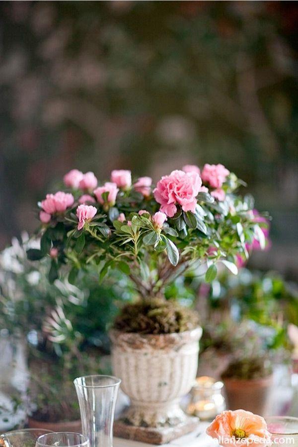 Garden Wedding Tablescape Potted Plant Centerpieces