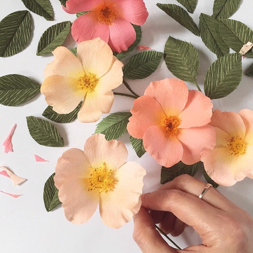 Pin by elizabeth tanner on paper flowers pinterest rose crepe