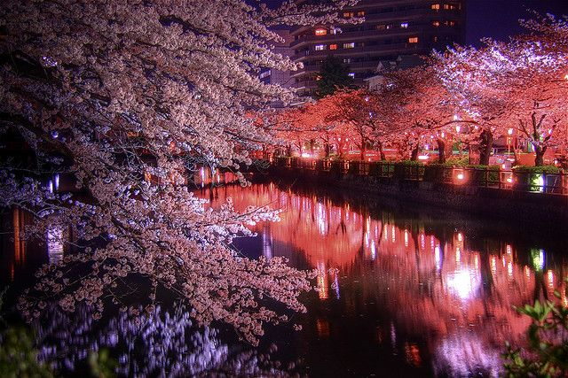 Night Sakura Hdr Photo Vacation Photos Mind Blowing Pictures