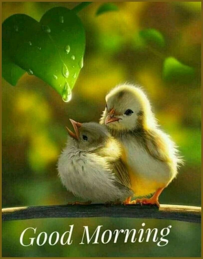 Pin By Durga On Photo Quotes Pinterest Birds Cute Animals And