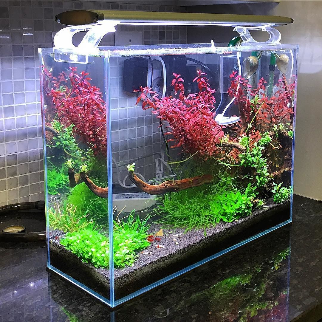 Freshwater fish no filter - Low Tech Shrimp Tank No Ferts Or By Shrimpery