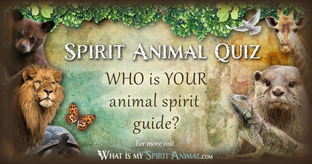 Meet Your Spiritanimal Take The Real Fun Accurate Spirit