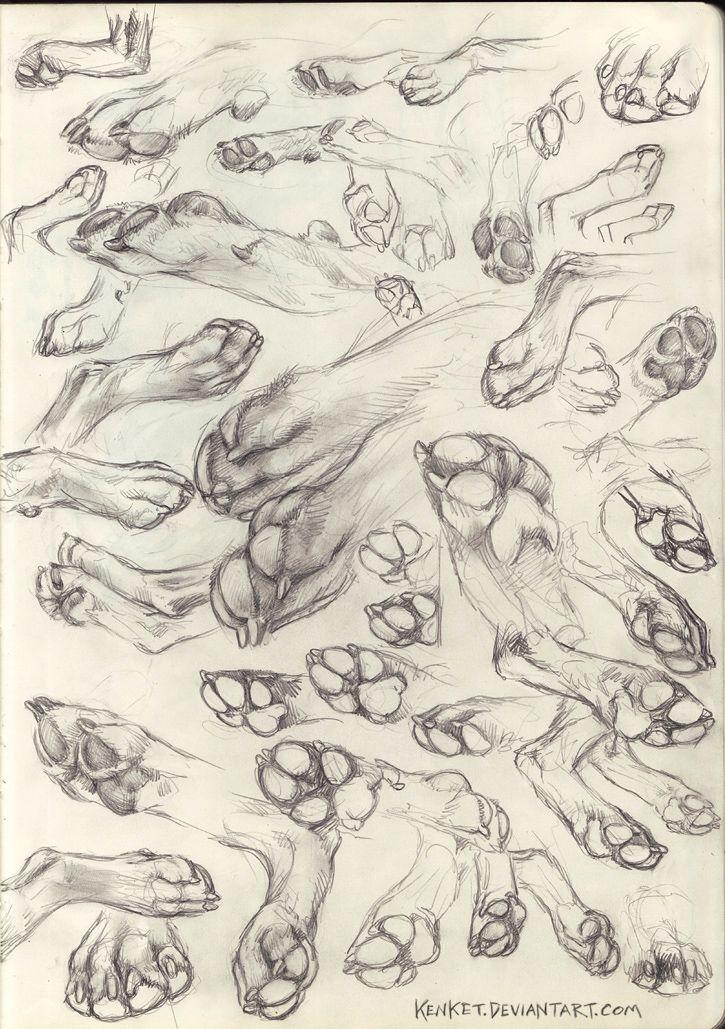 Paw Studies by kenket.deviantart.com on @DeviantArt | anatomy: great ...