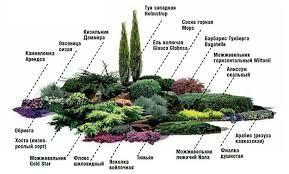 Картинки по запросу клумбы с хвойными растениями (с ...