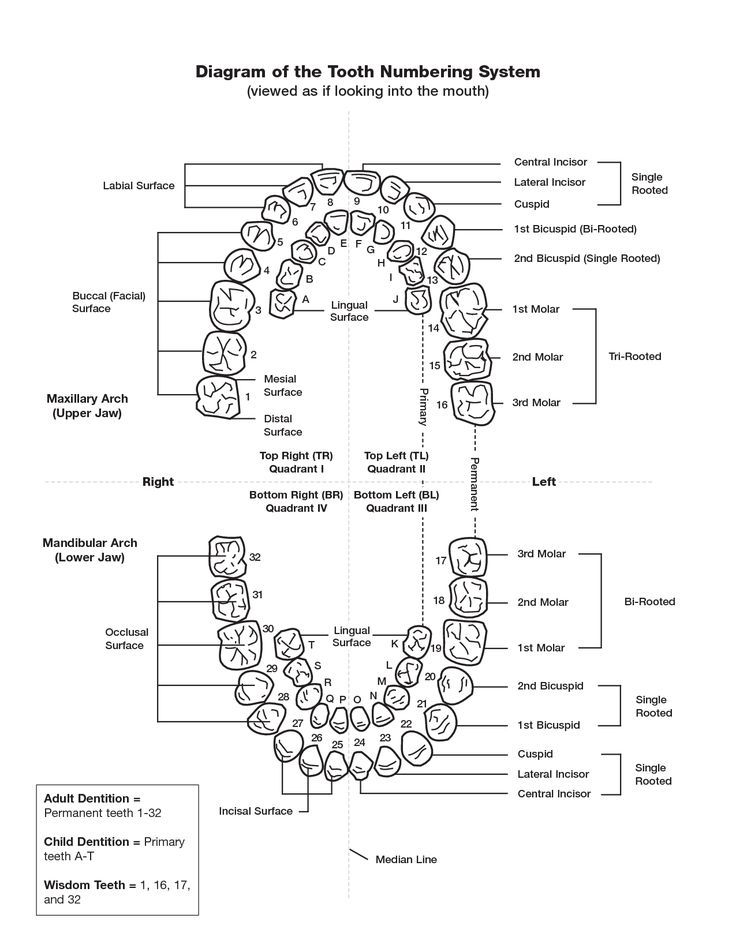 Tooth Numbering Chart PDF scope of work template - Central - scope of work template