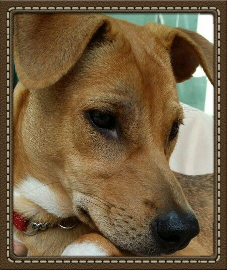 Tinker Tinker puppy dog