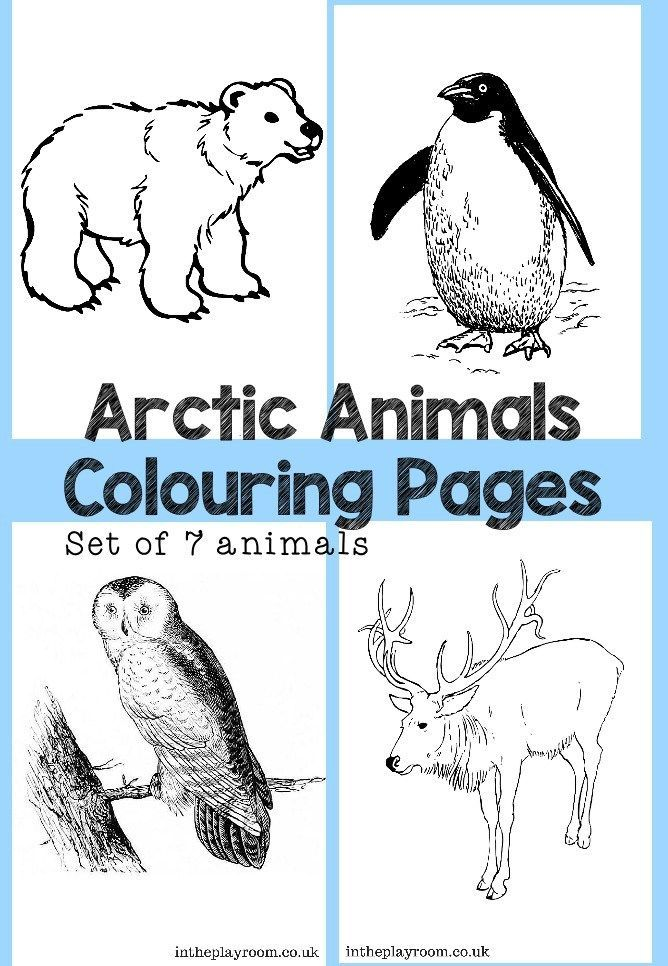 arctic animals colouring pages free coloing pages animal coloring pages polar bear coloring. Black Bedroom Furniture Sets. Home Design Ideas