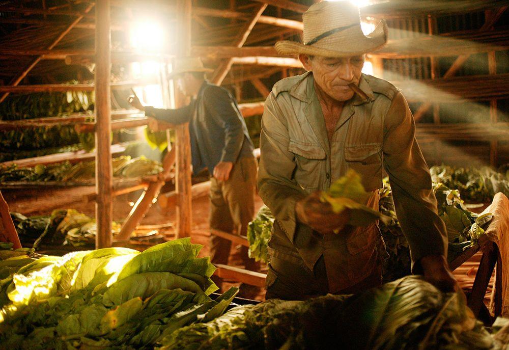 farmer-in-barn