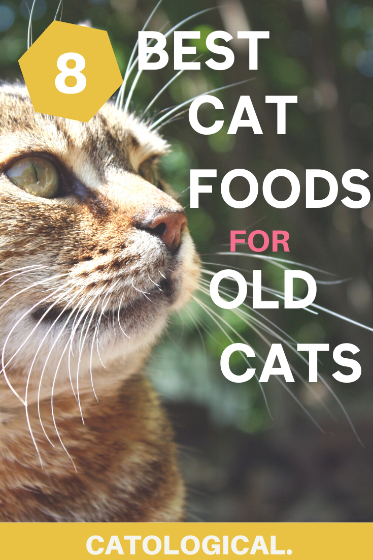 Cat Food For Old Cats Best Cat Food Cat Care Older Cats