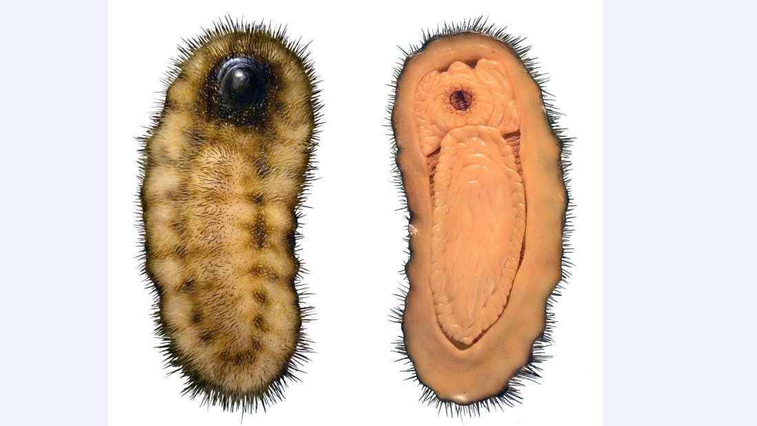 Bizarre-Looking Hairy Slug Fossil May Be The Ancestor To Snails Clams And Octopuses
