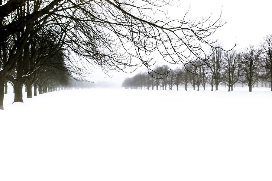 Foggy Winter Day by Ercan Sahin, via 500px