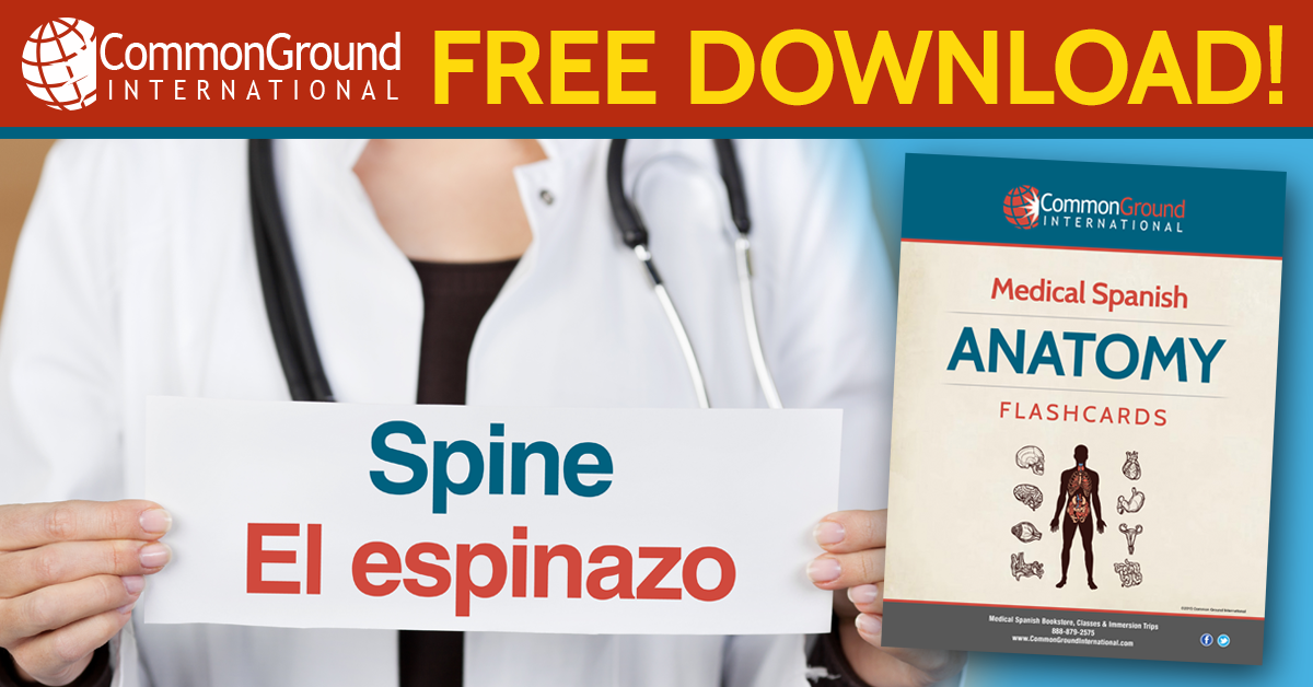 Parts of the body in Spanish: free flashcard download | Medical ...