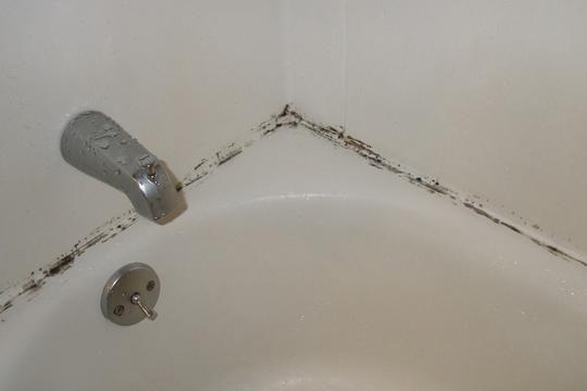 How To Kill And Prevent Bathroom Mold Bathroom Mold - How to prevent mold in bathroom ceiling