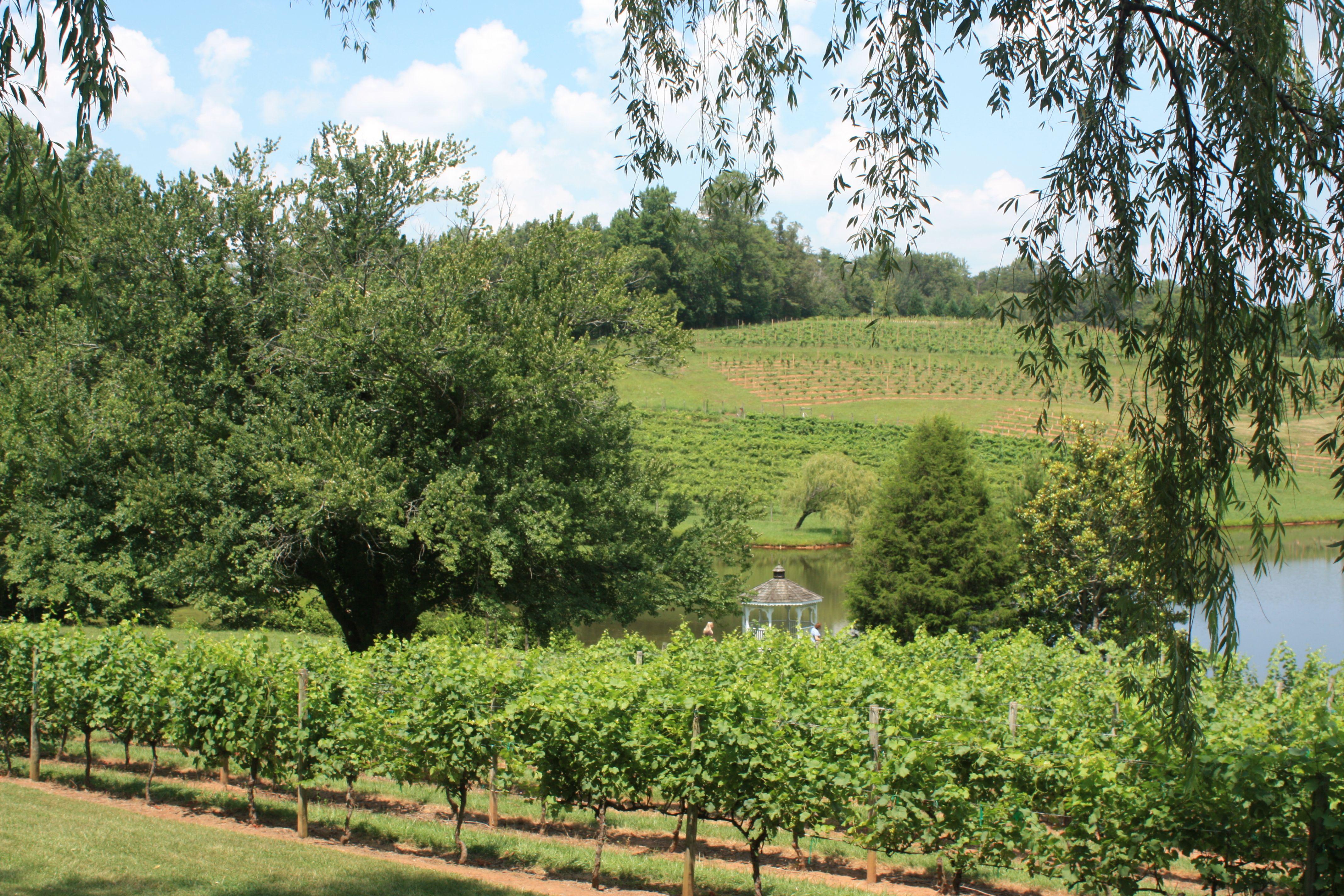 Crane Creek Winery.  Young Harris, GA