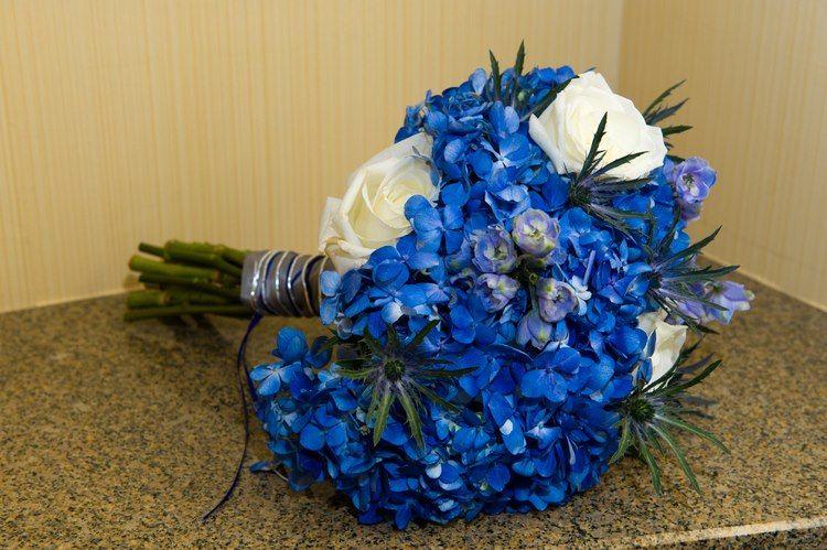 Blue wedding...brides bouquet - bright blue holland hydrangeas!